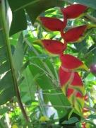 Bali July 2012 035
