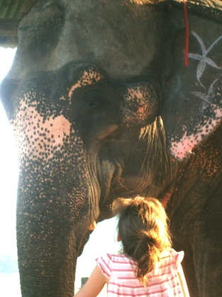 Chitwan Elephant, Nepal