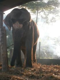 Elephant Chitwan National park