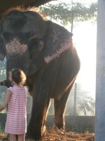 Elephant_Chitwan_Nepal