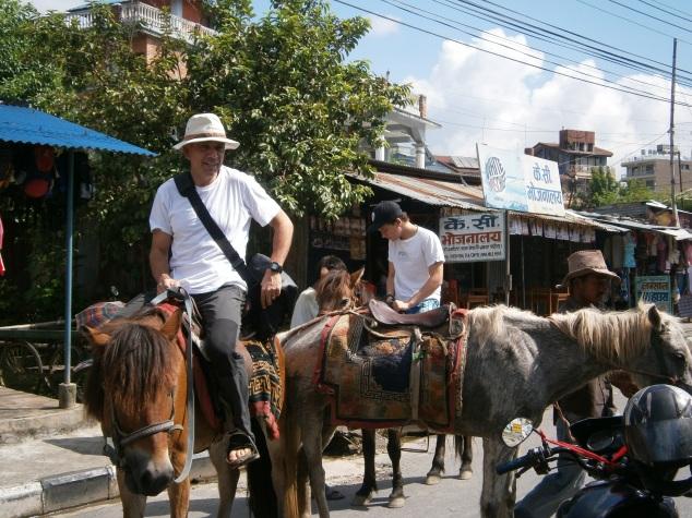 Ponies around the Phewa Tal, Nepal