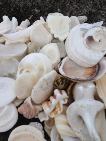 shells beaches